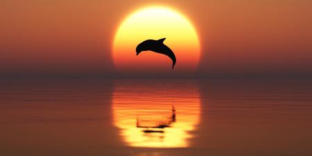 amanecer: El delf�n que salta la luz de fondo y el atardecer Foto de archivo