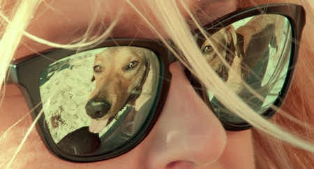 labrador teeth: reflection on eyeglasses of a dog playing in the beach
