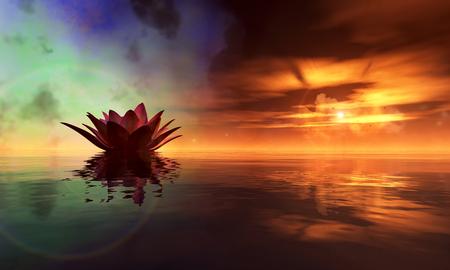 flor de loto: nen�far flotando en el agua y la puesta del sol
