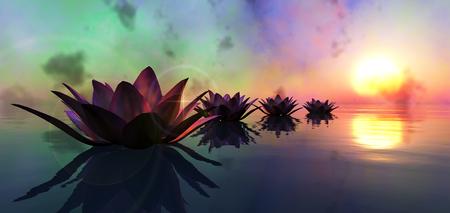 水と夕日に浮かぶスイレン