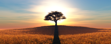 sunset and tree in wheat field