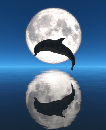 dolphin, moon and reflection Banco de Imagens