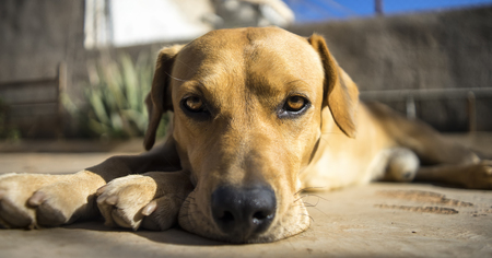 labrador teeth: photograph of a dog and sunset
