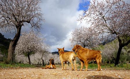 labrador teeth: photograph of a dog and almond trees