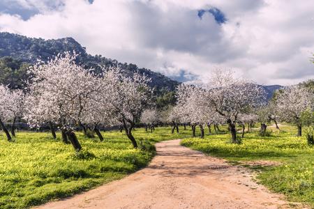 almond trees in a grassy field Banco de Imagens