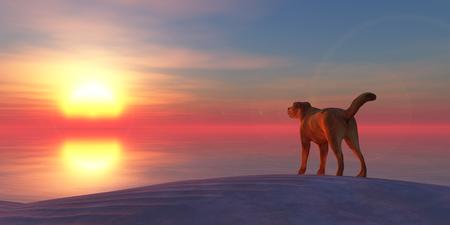 3d illustratie hond op het strand en zonsondergang