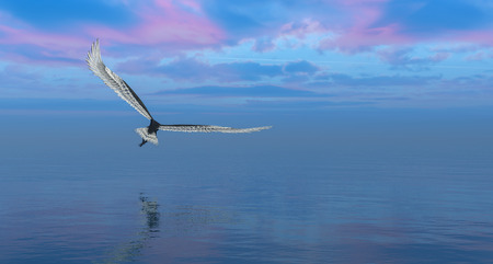 3d illustration of eagle flying flush with water
