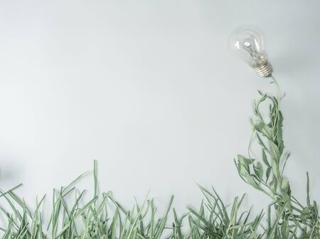 plants and flowers, light bulb, smooth background without reflections
