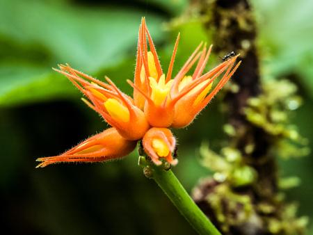 Bird of paradise, orange and yellow flower with ants 版權商用圖片