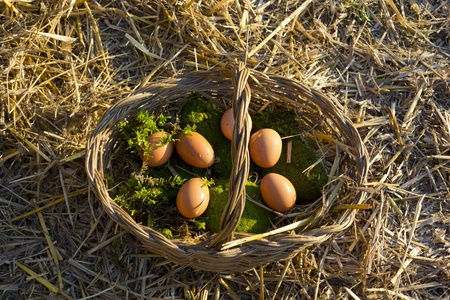 Fresh chicken eggs in a basket with straw and moss Stock Photo