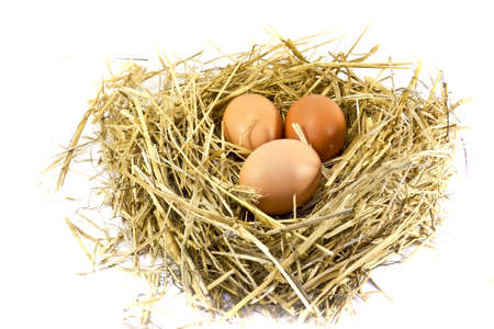 Fresh eggs brown chicken on the hen house straw, isolated on white background photo
