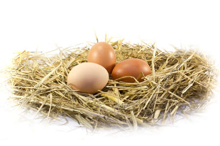Fresh eggs brown chicken on the hen house straw, isolated on white background