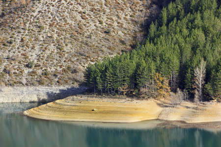 The pines grow on the shore of a lake of deep blue water photo