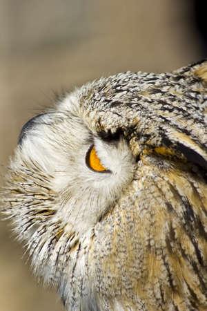 cetreria: Las aves de presa para la pr�ctica del antiguo arte de la cetrer�a