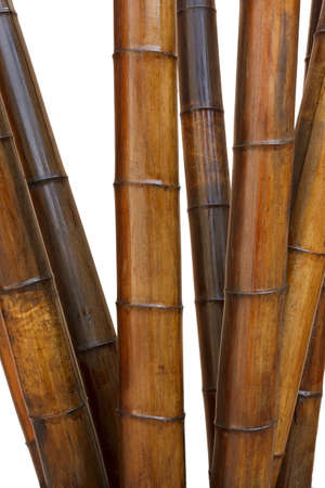 Decorative bamboo isolated on white background Stock Photo - 12761353