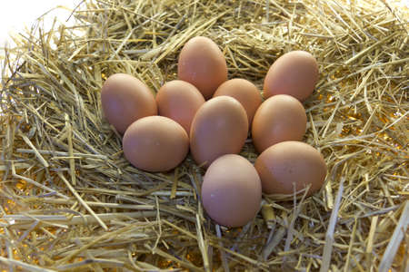 Fresh eggs freshly set upon the straw photo