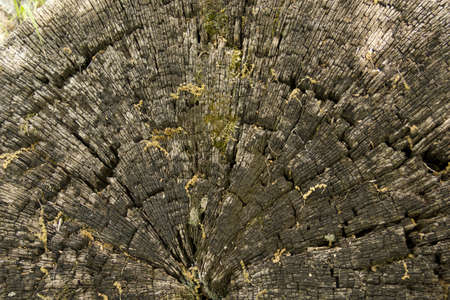 Organic texture, wood  Dry wood of a trunk, can be used as background or texture for your projects Stock Photo - 13859844