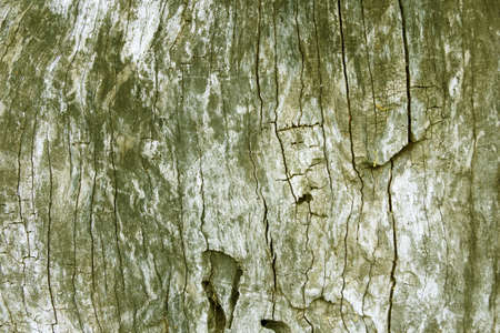 Organic texture, wood  Dry wood of a trunk, can be used as background or texture for your projects  Stock Photo - 13859845