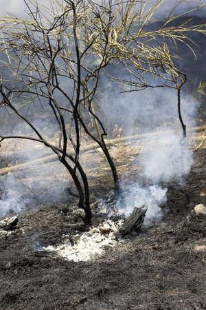 BARCELONA, SPAIN - JUNE 24: Forest fires in Barcelona after the festival of San Juan on June 24, 2012 in Barcelona, Spain.