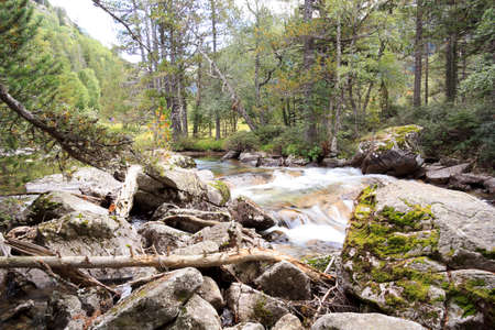 inhospitable: A river runs through a pine forest quickly, water silk effect