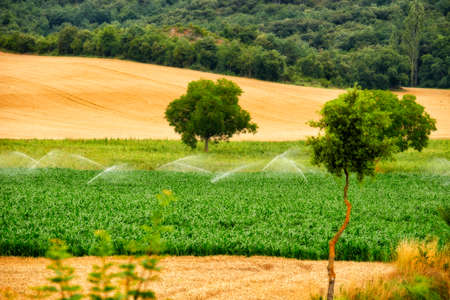 Irrigation by sprinkler fields, San Martín del Zar, Burgos, Spain, Europe