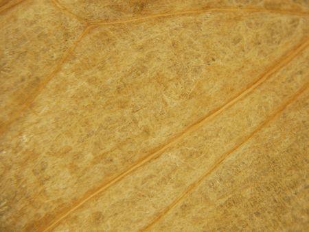 タマネギの乾燥肌、ティッシュおよび静脈は表示されます。 写真素材