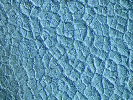 epiderme: Picture of an apples epidermis
