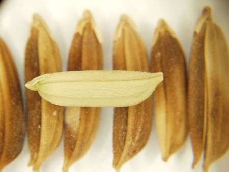 stereoscope: Stereoscopic shot of a rice seed on top of other bad seeds