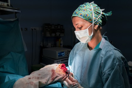 Surgeon holding a patient's operated elbow with a separator. She's illuminated by the OR light. You can see the open wound. Stock fotó