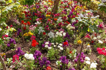 Colorful flowers in the gardens of the Alhambra in Granada from Andalusia, Spain. Many flowers of purple, orange, yellow, white, pink and green.