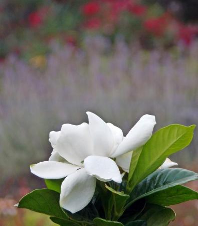 bordeau: beautiful garden7