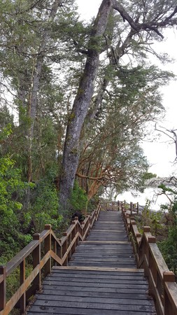 famous forest  landscape in southern Argentina,  seven lakes area, myrtle tree photo