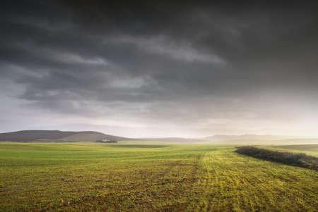 Open wheat field in a stromy day