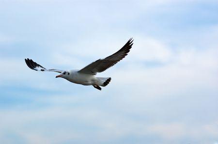 samutprakarn: Seagull at Bangpu, Samut-Prakarn, Thailand