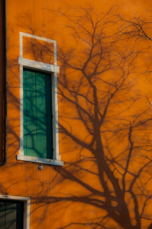 without window: Strong shadow from winter tree without leaves, on vivid orange wall and green window Stock Photo