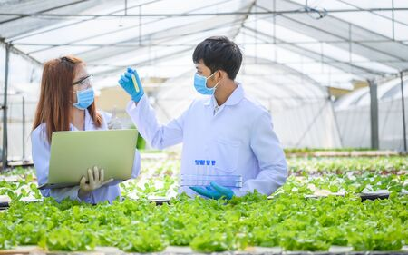In the Industrial Greenhouse Two Agricultural Engineers Test Plants Health and Analyze Data with Tablet Computer,Non-toxic vegetables new normal concept