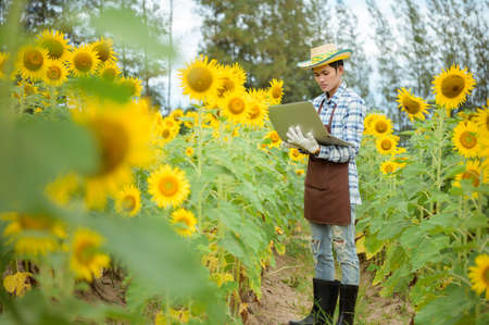 Asian farmer holding tablet and standing in sunflower field with fresh yellow flowers in early summer