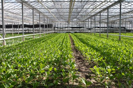 greenhouse Stock Photo - 767614