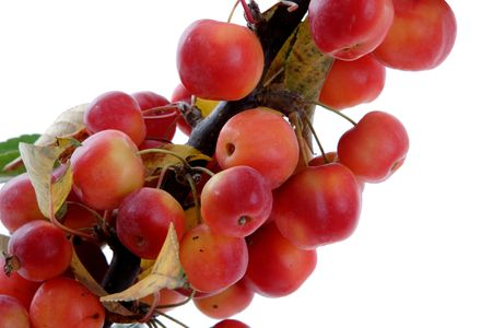 Apples Stock Photo - 3695095