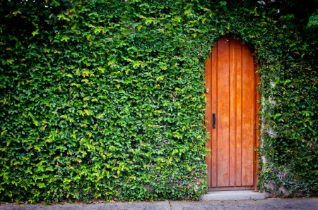 Wooden door with foliage around Stock Photo - 19382176