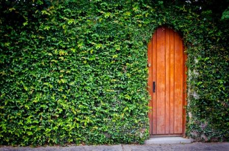 Wooden door with foliage around Stock Photo - 19382176