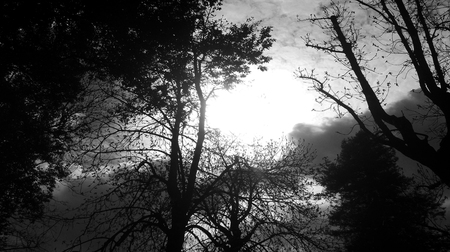 black and white trees and light Stok Fotoğraf