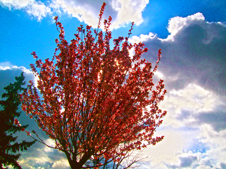 red tree and blue sky Stok Fotoğraf