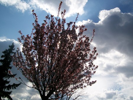 spring tree with behind the cloudy blue sky Stok Fotoğraf