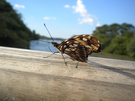 butterfly walking on a railing photographed in the foreground
