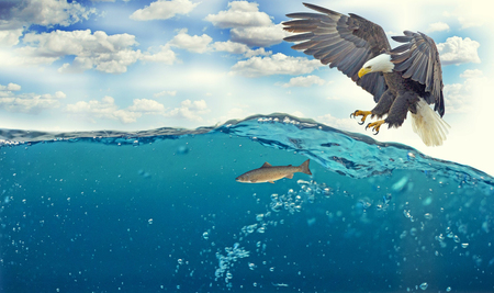 predatory eagle who wants to catch a fish under water Stock Photo