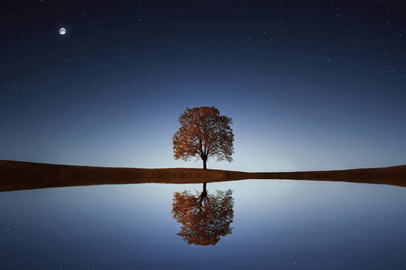 nature at night landscape with a tree in the middle whose image is reflected on the water Stok Fotoğraf