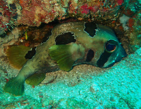 Cute fish tucked into a gap on the reef floor