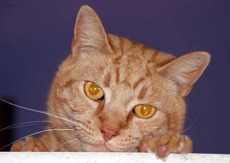 Orange chat regarde sur une corniche en bois.  Banque d'images - 360001