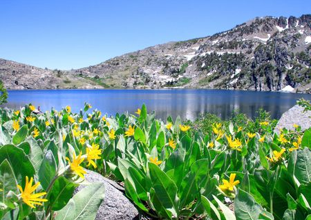 Beautiful Lake Winnemucca near Lake Tahoe, California, with wild Mule's Ear flowers in the foreground.